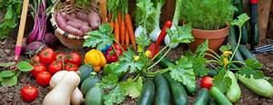 Quel Legume Planter En Septembre : fin ao t quels fruits et l gumes planter dans son potager ~ Melissatoandfro.com Idées de Décoration