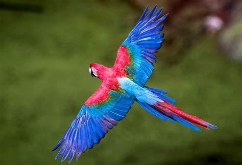 Beautiful Colorful Birds Flying