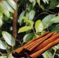 khasiat kayu manis wedange mbah darmo mbah darmo wedang