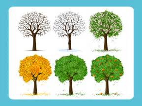 Most Popular Christmas Trees Types by Free Vector Trees
