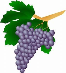 Vector gratis: Uvas, Planta, Pasas De Uva, Vino Imagen gratis en Pixabay 159820