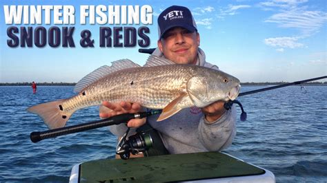 snook florida fishing winter redfish