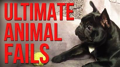 Fails Animal Funny Compilation Animals Failarmy Funniest