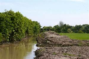Kerusakan Mangrove   Mongabay Co Id