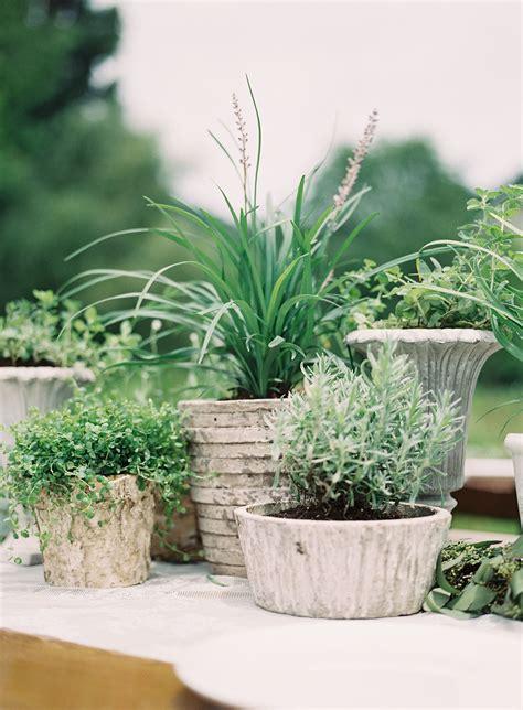 Organic Potted Plant Centerpieces Wedding Pinterest