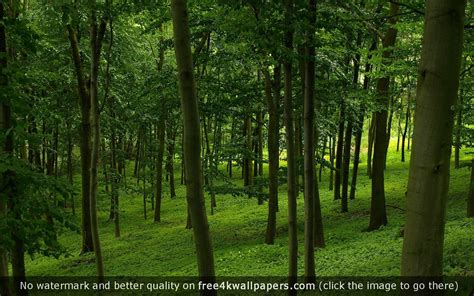 Green Forest Photo Hd by 75 Forest Green Wallpaper On Wallpapersafari
