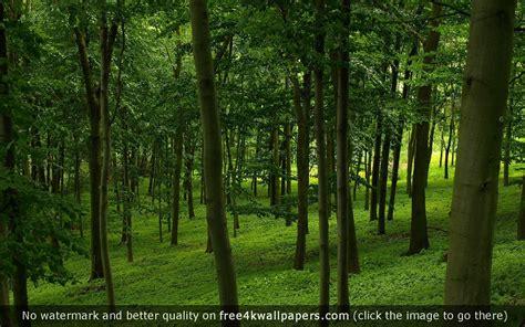 Forest Green Wallpaper Wallpapersafari