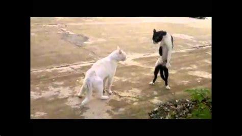 ninja cat    bro hd p youtube