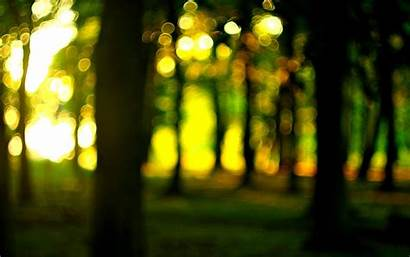 Wallpapers Blur Background Nature Forest Tree Screen