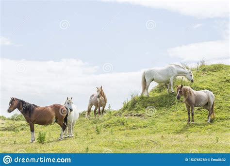 wales ponies wild isle anglesey dunes