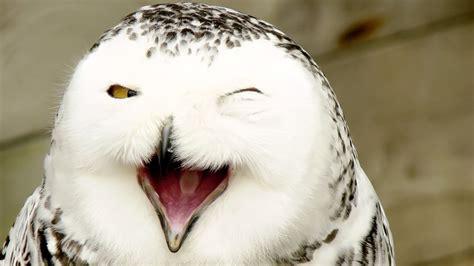 animal planet magic  snowy owl  documentary