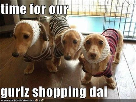 Wiener Dog Meme - dashound meme has a hotdog dachshund page 24 loldogs n cute puppies funny doxie