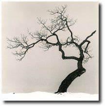 Tatouage Arbre Japonais : celtic tree of life tattoo celtic tree of life by ~ Melissatoandfro.com Idées de Décoration