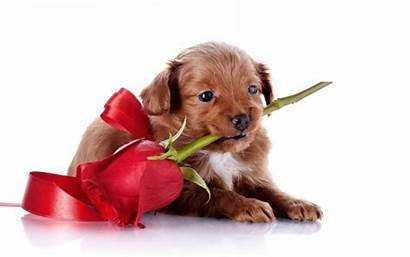Puppy Dogs Wallpapers Funny Backgrounds Angry Flower