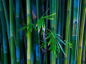 Bamboo Forest HD desktop wallpaper