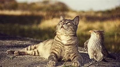 Animals Cat Desktop Birds Ultra 4k Funny