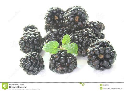 fresh blackberries fresh blackberries stock photos image 13421253
