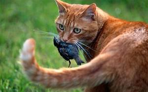 Cats La : my cat won 39 t stop killing birds what should i do ~ Orissabook.com Haus und Dekorationen