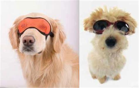 sonnenbrille fuer hunde