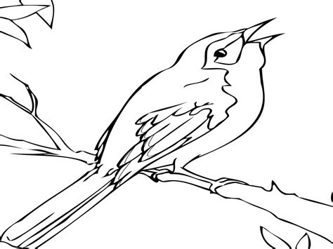 Image Northern Mockingbird Coloring Page From Category