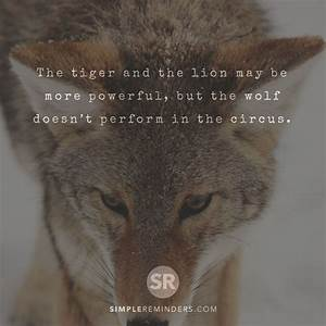 The tiger and t... Wolf Vs Tiger Quotes
