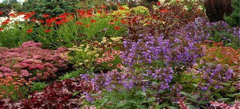 perennial plants mail order on line perennial plant mail order nursery bloomin designs nursery