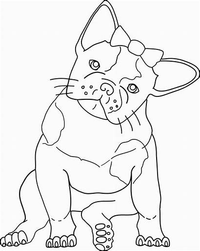 Coloring Pages Dog Bull Bulldog French Popular