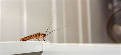 how to prevent cockroaches in kitchen cabinets how to get rid of roaches in kitchen dandk organizer 9529