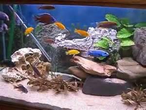 aquarium 600 l occasion aquarium 600 l en cichlid 233 s du malawi