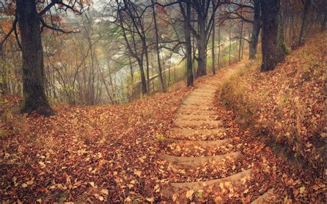 nature, Landscapes, Trees, Forest, Path, Stairs, Tracks ...