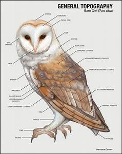 Free Owl Cliparts Body  Download Free Clip Art  Free Clip Art On Clipart Library