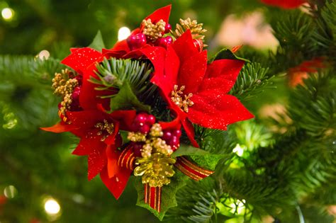 poinsettia christmas decoration free stock photo public
