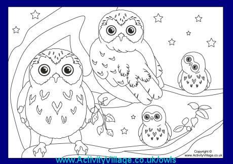 owls  activity village