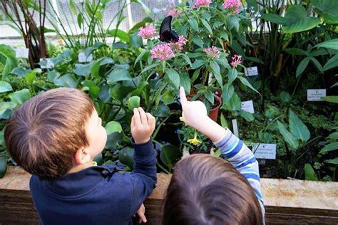 Botanischer Garten München Kinder by Schmetterlingsausstellung Im Botanischen Garten