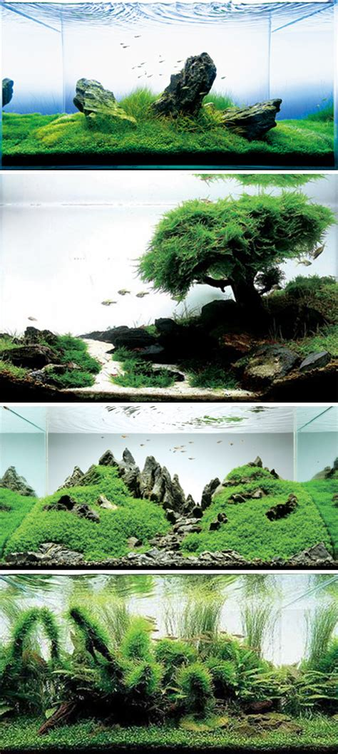Precision Aquascapes - holy water 24 amazing aquariums and clever fish tanks