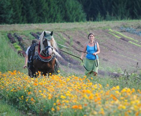 hofbauernhof aktionstag pferd schoemberg