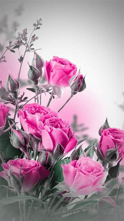 Iphone Floral Rose Backgrounds Flower Pink خلفيات