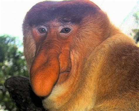 8 Butt Ugly Animals