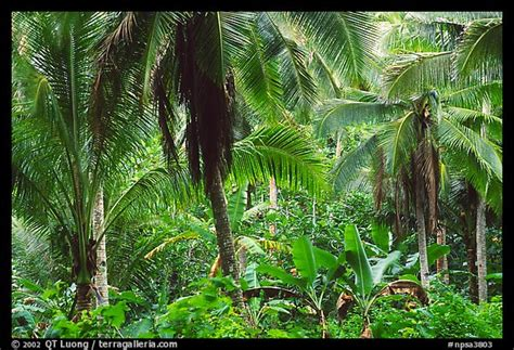 Picturephoto Mix Of Native And Planted Tropical Plants