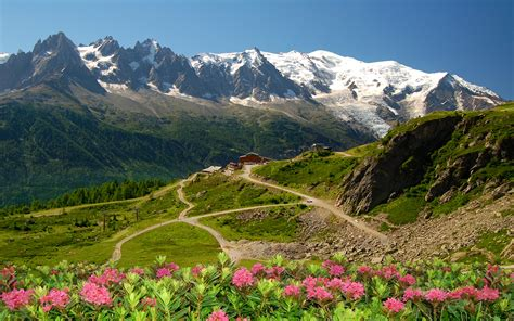 mont blanc glacier flowers snow mountain lodge time