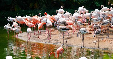 zoos vacation spots vacationidea