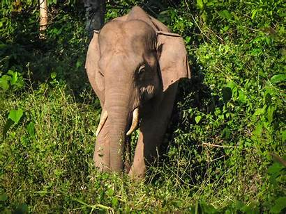Elephant Patricia Sims Credit Unnamed