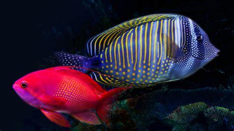 5 conseils pour l achat de poissons d aquarium trucs et conseils sur les aquarium pour la maison