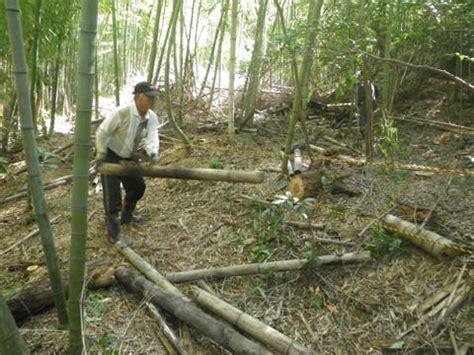 2tトラック10杯分の竹の廃材を出す | 菩提寺まちづくり協議会 ...