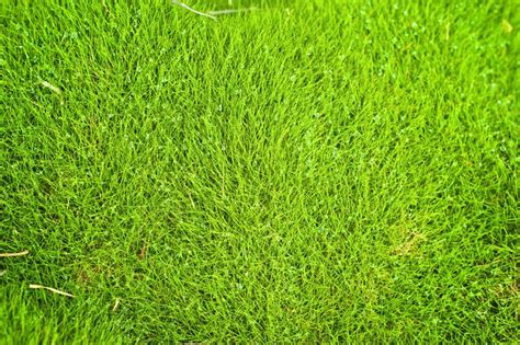 lawn grasses no fuss lawns with zoysia grass gardening know how