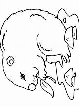 Groundhog Coloring Pages Printable Drawing Sheets Earth Holiday Hog Line Sheet Kindergarten Season Clipartmag Pure sketch template