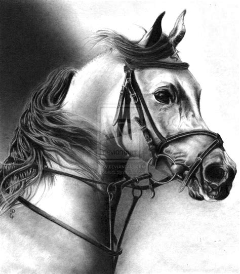 pencil drawings  animals  debbie engel  coroflotcom