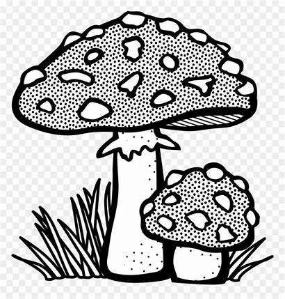 Toadstool Clipart Mushroom Lineart Jamur Gambar Mewarnai