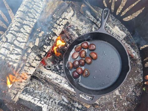 17 Best Images About Chestnuts On Pinterest Trees