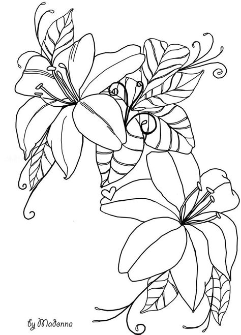 outlines  flowers coloring home